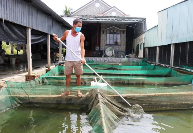 Thị trường cá giống Sức mua yếu, giá giảm sâu